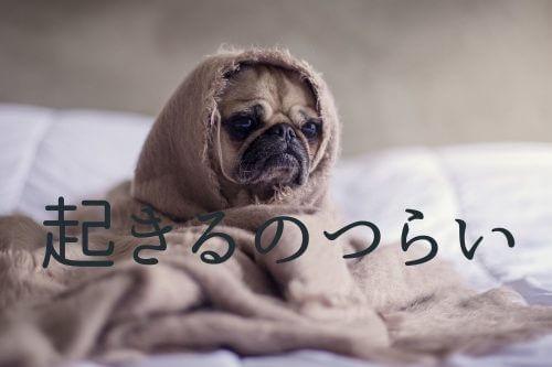 寝起きがつらい犬