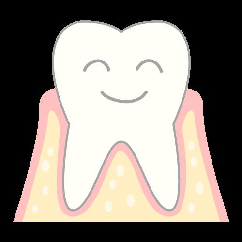 歯と歯槽骨の画像